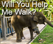 See how you can help elephants injured by exploding land mines