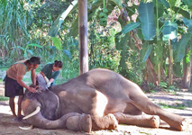 Help elephants get the medical care they need. Click to learn more.